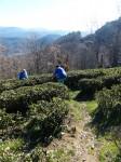 Teegarten 2